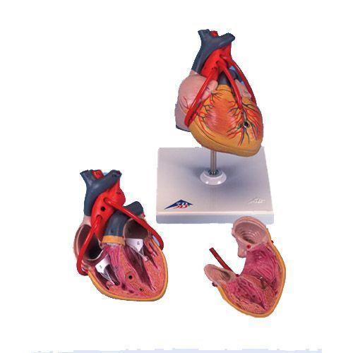 Klasyczny model serca z bajpasami G05