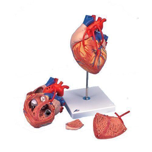Model serca z bajpasami G06