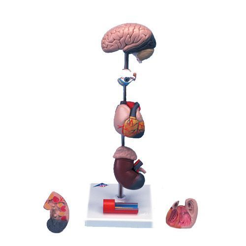 Model nadciśnienia tętniczego G35
