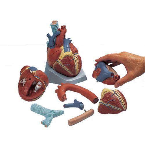 Model serca 7-części VD253