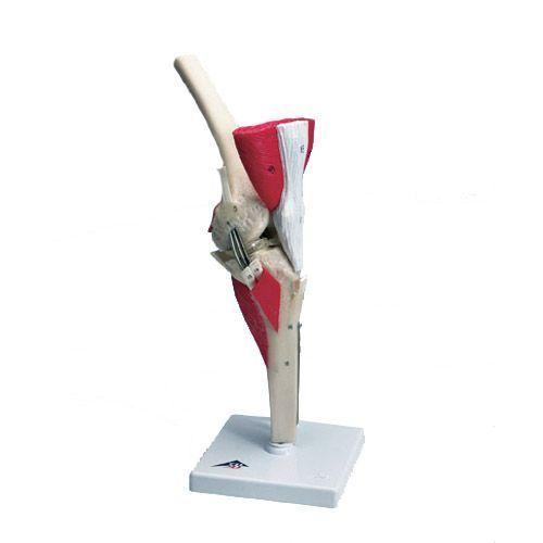 Luksusowy model kolana W47007