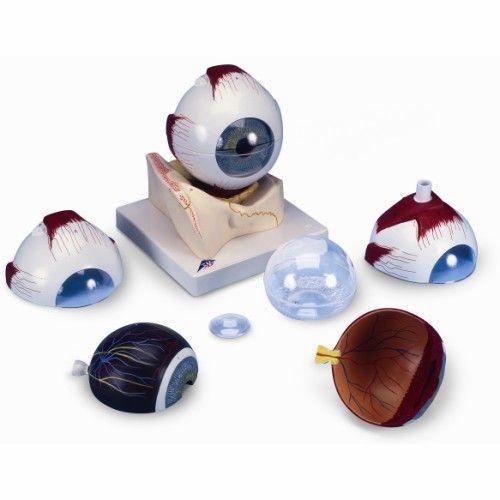 Model oka 7-część 5 razy powiększony F11