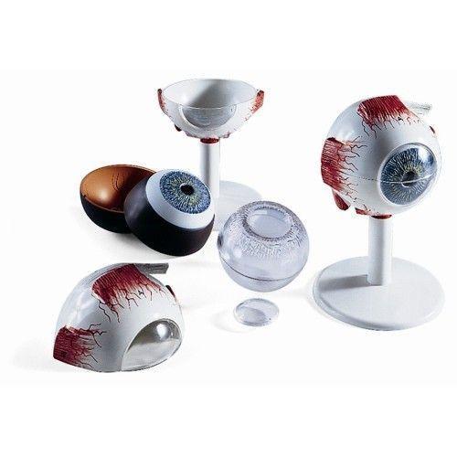 Model oka 6-częściowy, 3 razy powiększony F13