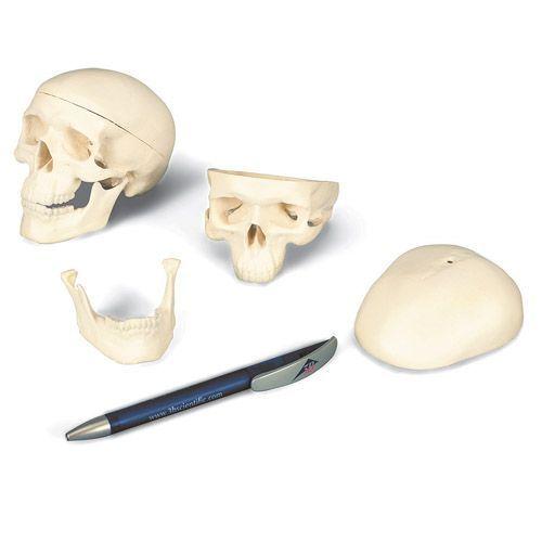 Mini czaszka, trzy części A18/15
