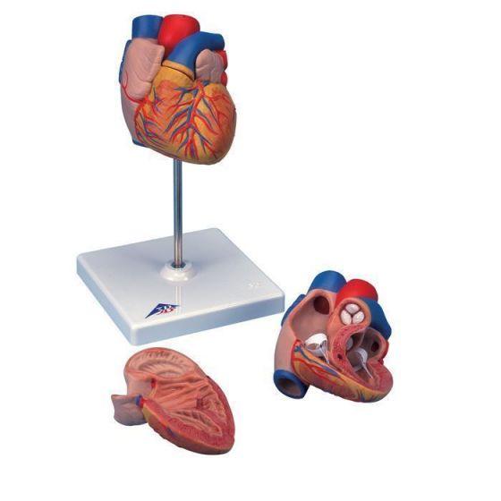 Model serca G10