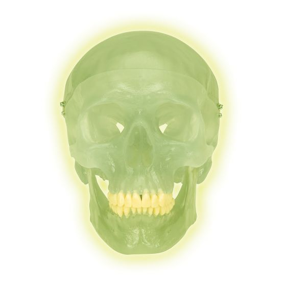 Czaszka fluorescencyjna 3-częściowa A20/N
